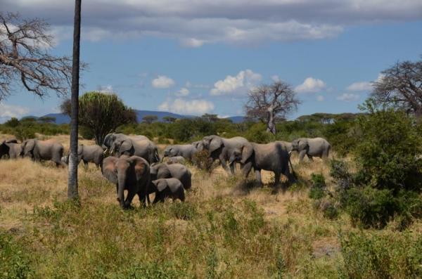 20. Juni bis 21. Juni- Von Udzungwa zum Ruaha Nationalpark