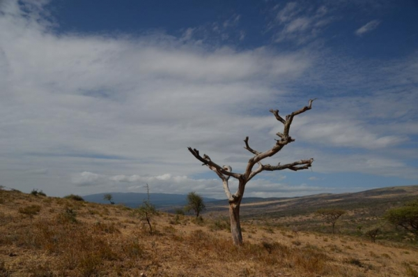 08. Juni – Serengeti