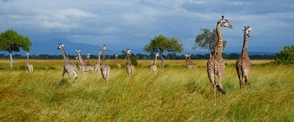 Individualreisen Tansania