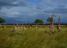 3/4 Tage Safari im Mikumi und Udzungwa Nationalpark in Tansania