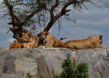 14 Tage Rundreise- Höhepunkte Tansanias