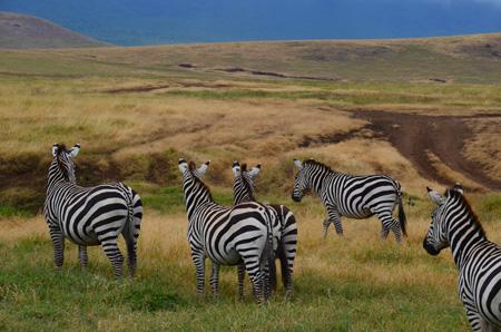 Tansania Reiseinformationen