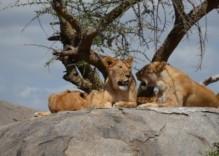 09. und 10. Juni – Serengeti und Kraterhochland